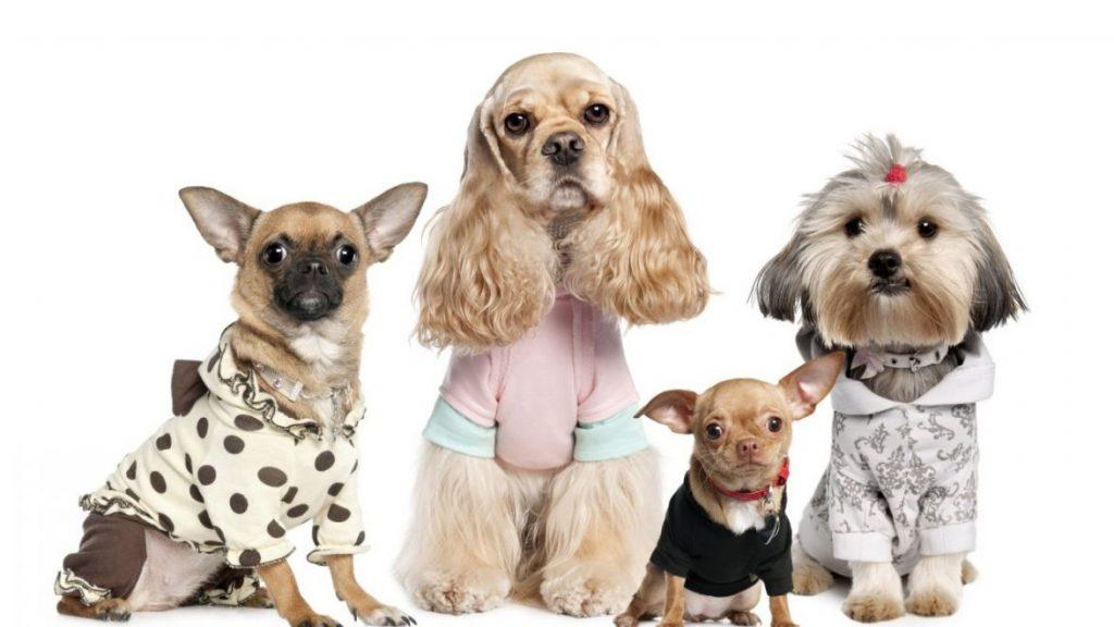 Kinh doanh online mặt hàng gì - phụ kiện dành cho thú cưng