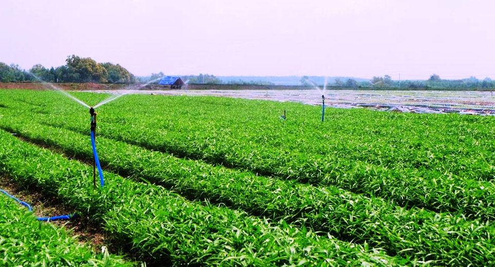 Trồng rau sạch theo quy trình bài bản - ý tưởng kinh doanh ở nông thôn