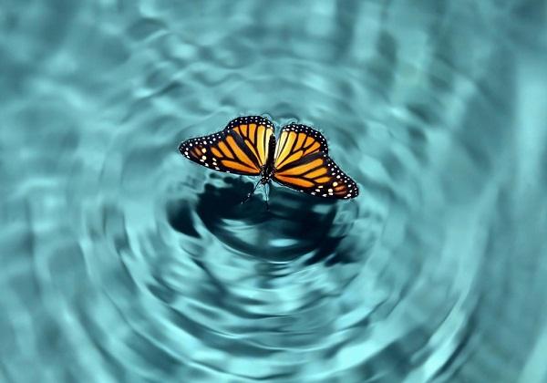 Bài học cho con người từ hiệu ứng cánh bướm